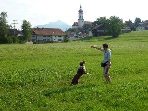 Viel Auslauf für den Hund