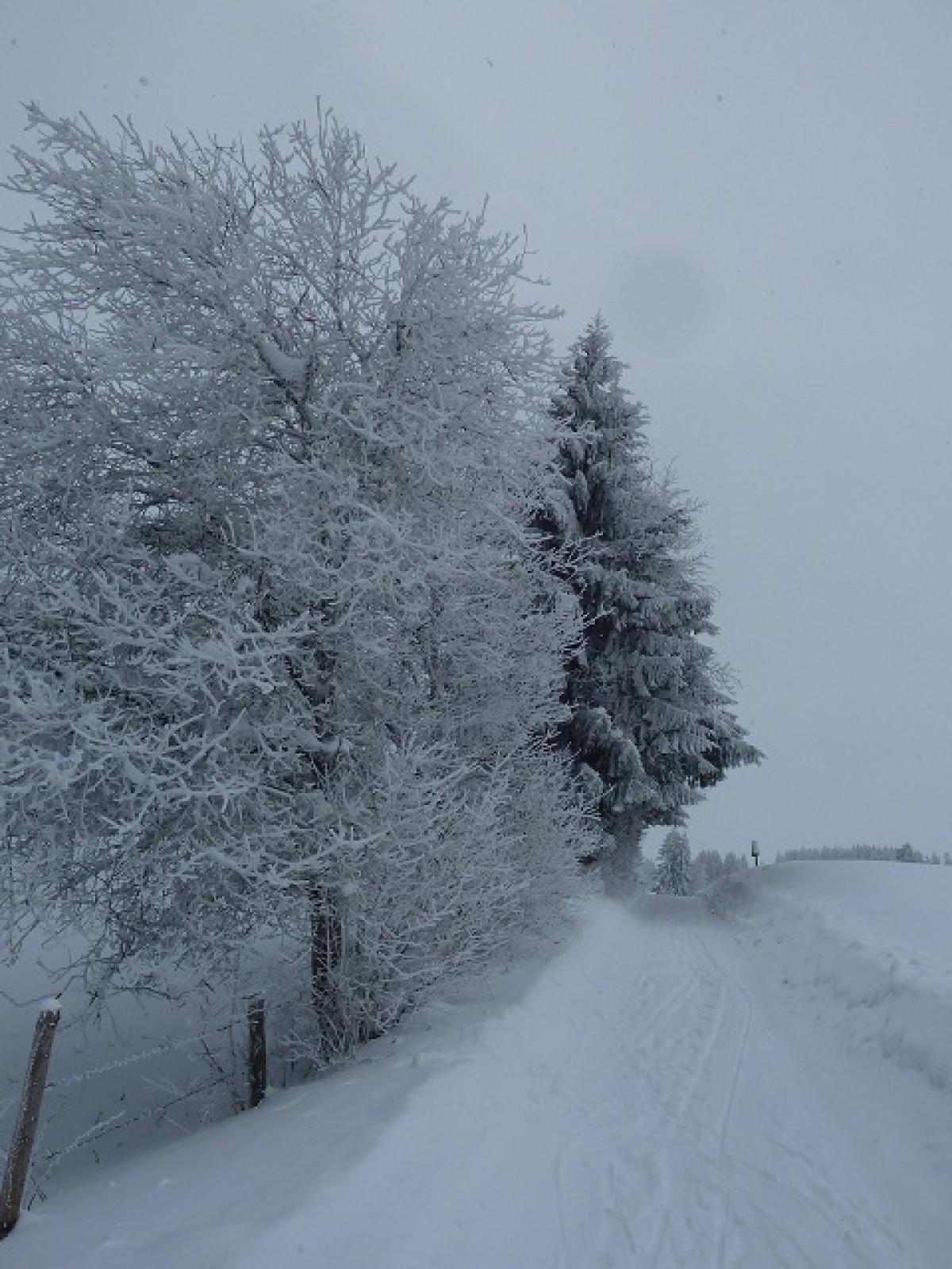 Weg nach Oberelleg