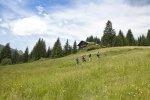 Wanderung zur Hütte