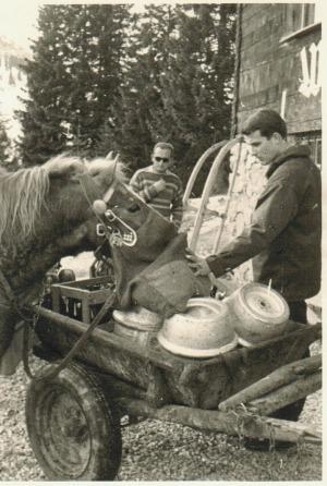 Pferde ziehen Speisen und Getränke