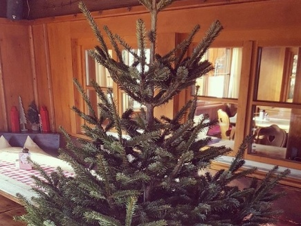 Ungeschmückter Weihnachtsbaum