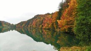 Traumhafte Herbst-Wälder im Allgäu