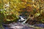 Herbst-Spaziergänge in den Allgäuer Wäldern