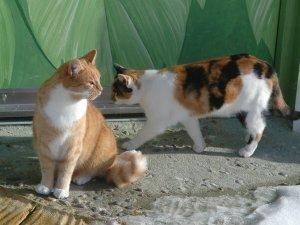 Katzen im Wellnesshof Blenk - 5 Sterne Ferienwohnungen in Wertach im Allgäu