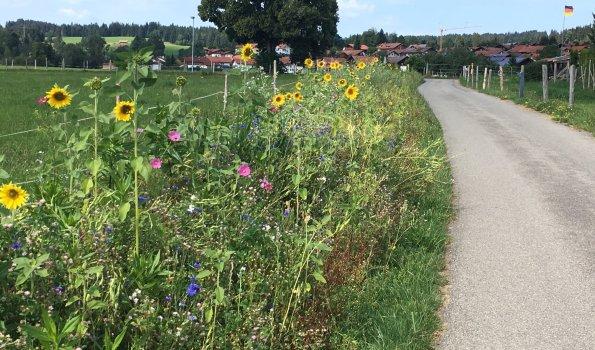 Blühstreifen am Wegesrand