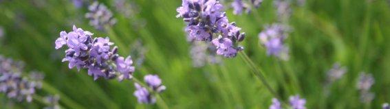 Lavendel - Wellnesshof Blenk - 5 Sterne Ferienwohnungen in Wertach im Allgäu