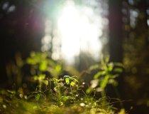 Frühlingssonne im Wald