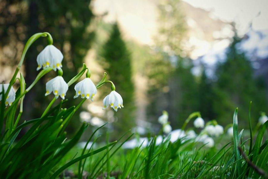 Maiglöckchen auf der Frühlingswiese - Wellnesshof Blenk - 5 Sterne Ferienwohnungen in Wertach im Allgäu