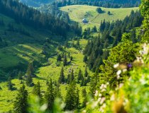 Alphütte im Tal