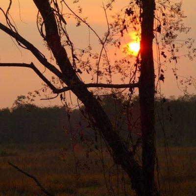 Chitwan NP Sonnenuntergang