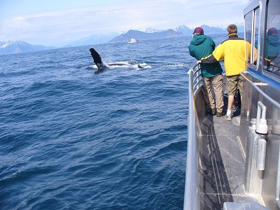 Walbeobachtungstour bei Seward
