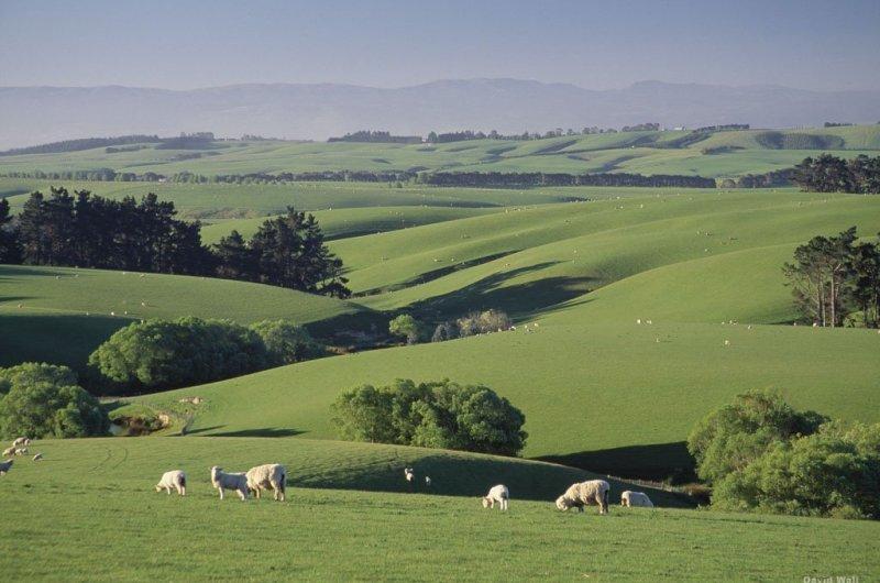 Schaafsfarm