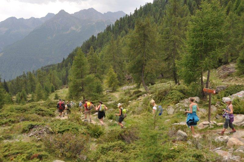 Durch Lärchenwald ins Val de Sole