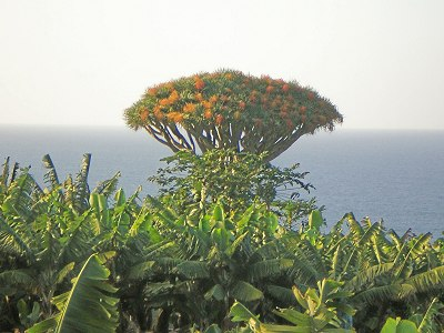 Vegetation Teneriffas