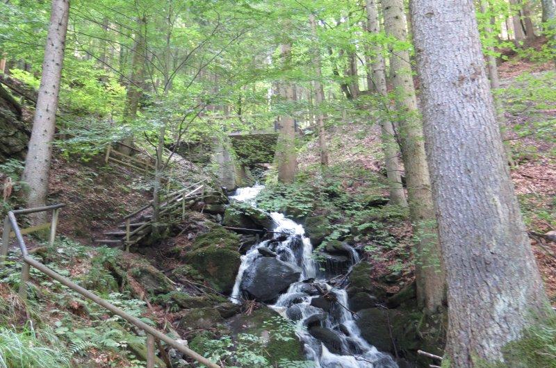 Waldweg zum Wörthersee