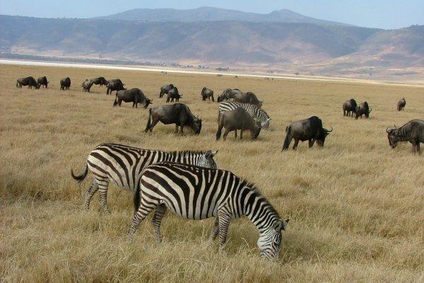 Wildlife - Ngorongoro Crater