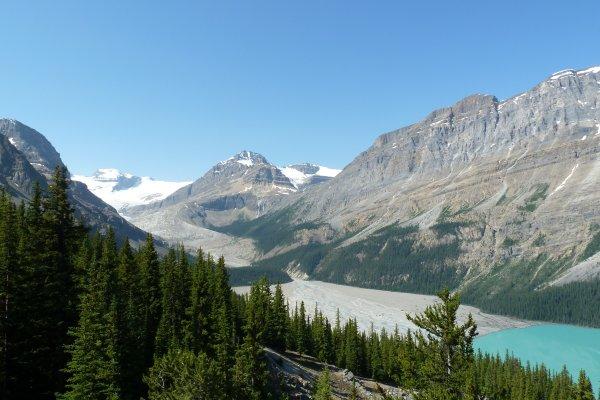 Peyto-Glacier