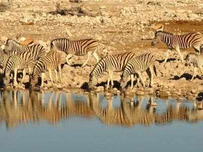 Tag 12 namibia