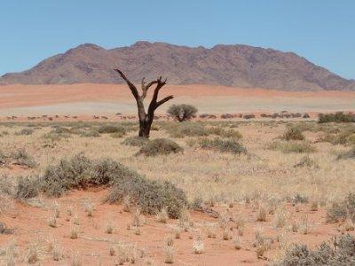 Tag 4 namibia