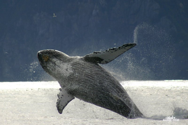 Walbeobachtungen