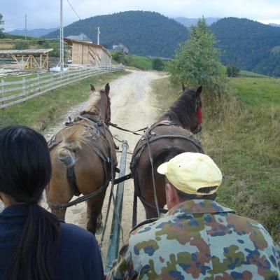 Traditional-transportation