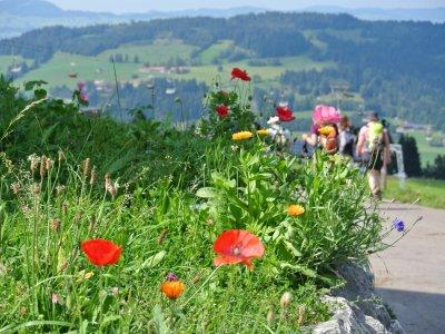 Allgäu Wandergruppe mit Blumen