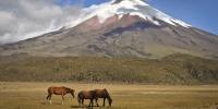 Cotopaxi mit Pferden