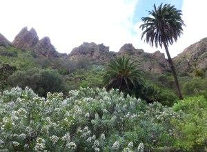 Bandama, ruta del volcán y el vino 2