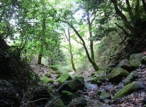 Ruta del bosque encantado 6