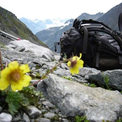 Gelbe Blumen mit Rucksack
