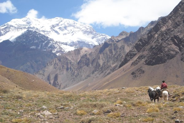 Aconcagua berg packtiere