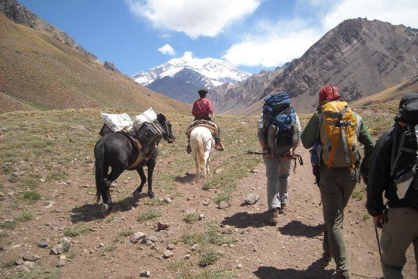 Aconcagua aufstieg wanderer packtiere