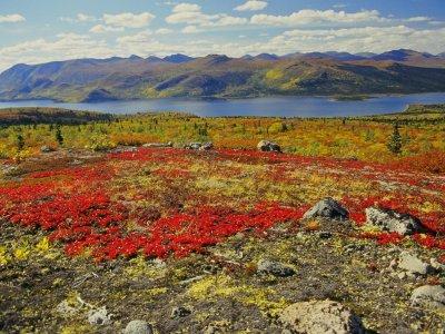 Alaska Wandern und Erleben