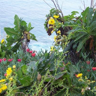 An der Steilküste von Teneriffa