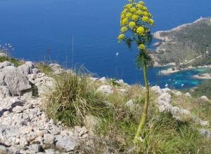 Faszination Mallorca