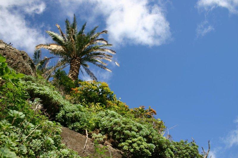 Wanderwoche auf Teneriffa