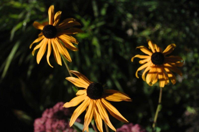 Blütenpracht im Allgäu