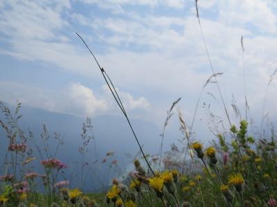 Blumenwiese oberhalb Molveno See