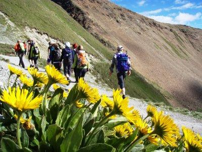 Höhenweg mit Blumen
