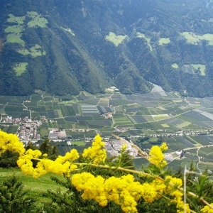 Blick ins Vinschgau