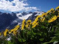 Bergblumen und Gletscherberge