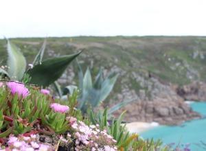 Küstenblumen Cornwall