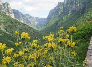 Vikos Schlucht - Blick zurück in den Canyon
