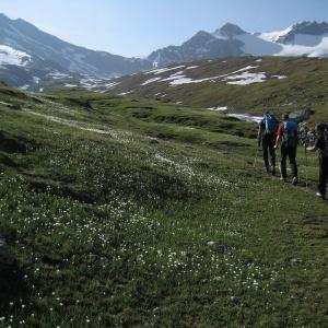 Bergwiese im Aostatal