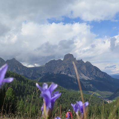 Alpenblumen Dolomiten