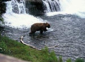 Bär am Wasserfall