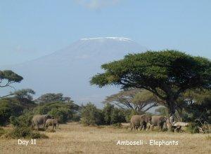 Amboseli Elefanten