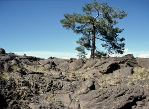 Lava mit Baum