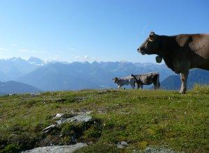 E 5 - Vieh am Ventberg