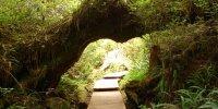 Vancouver Island - Boardwalk (Regenwald)
